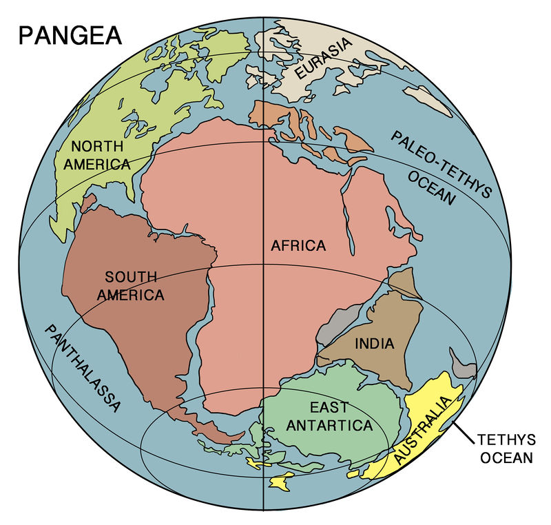 Continental Drift ( Read ) Earth Science CK-12 Foundation