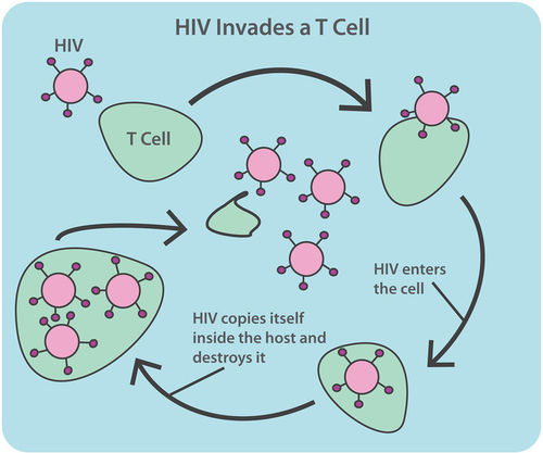 HIV and AIDS CK-12 Foundation