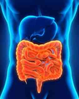 Human Intestine Anatomy, Digestive System