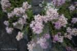Random flower with bee