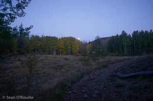 Moonset over aspens