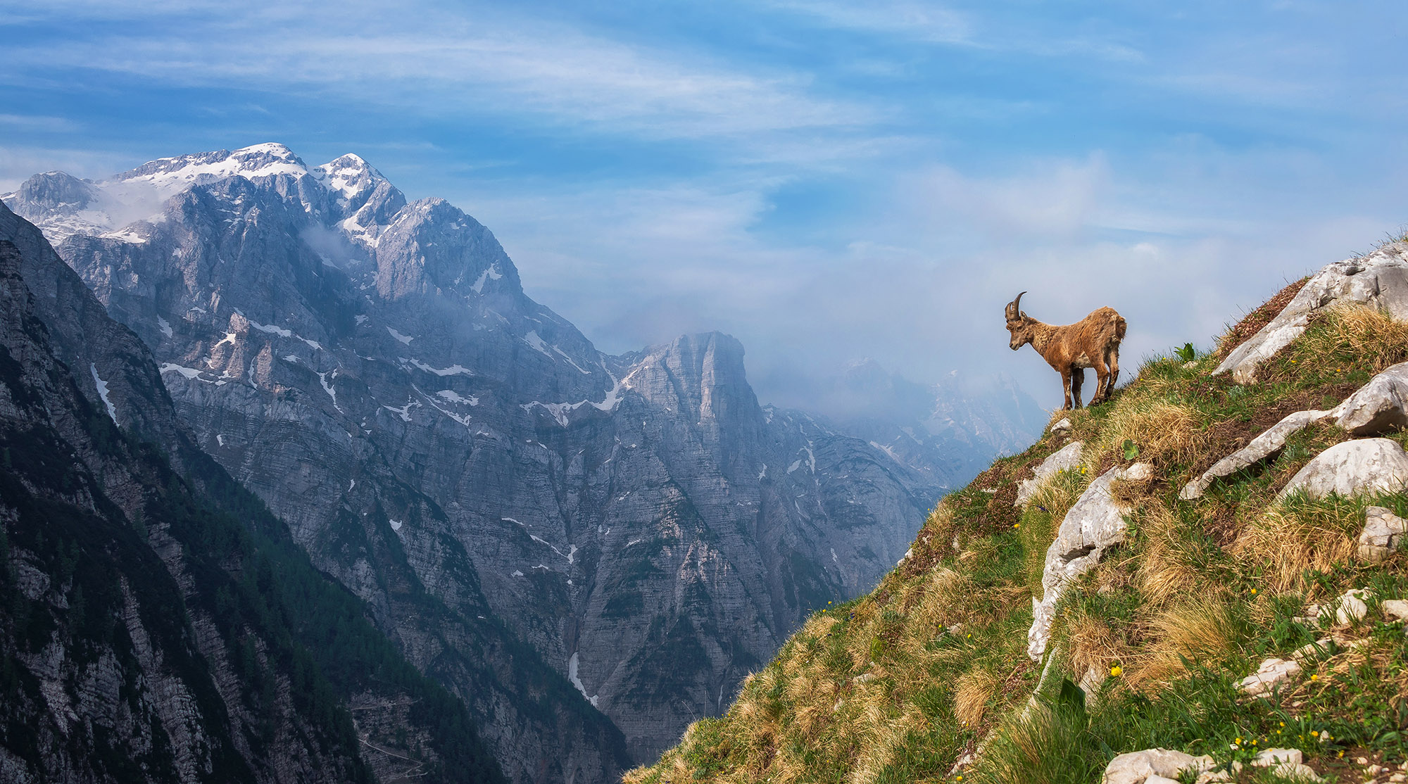 Tazmania Wallpaper Iphone Dreamy Pixel Alpine Ibex In The Morning Dreamy Pixel