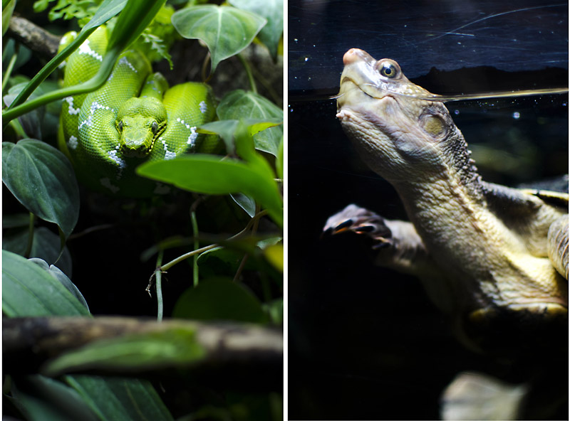 diptych snake and turtle 1 The National Aquarium of Baltimore!