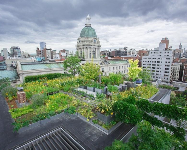 Green-Roof-city