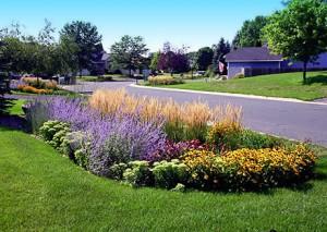 residential-rain-garden