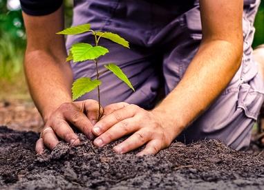 tree_planting_0