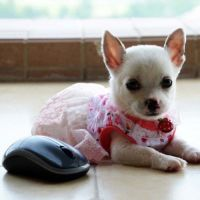 Cute Girl Dog Clothes Photo - 1 | Dress The Dog - clothes ...