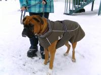 Dog Coats For Boxers Photo - 1 | Dress The Dog - clothes ...