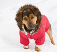 Dog Snow Coat | Dress The Dog - clothes for your pets!