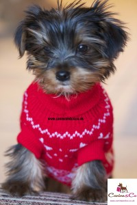 Puppies Outfits | Dress The Dog - clothes for your pets!