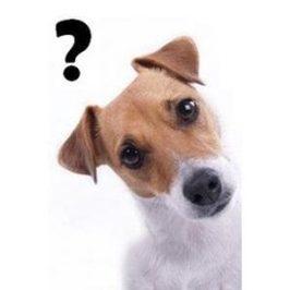 Apprendre la propreté à son chien :<br /> les erreurs à éviter
