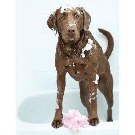 Donner le bain à son chien
