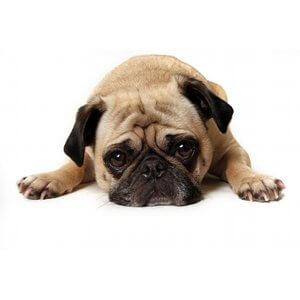 Aider votre chien pour sa rentrée