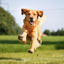 Apprendre le rappel à son chien : <br />3 jeux pour apprendre en s&#8217;amusant !