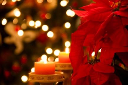 ChristmasDecoration_MariaJuliaGuimaraes