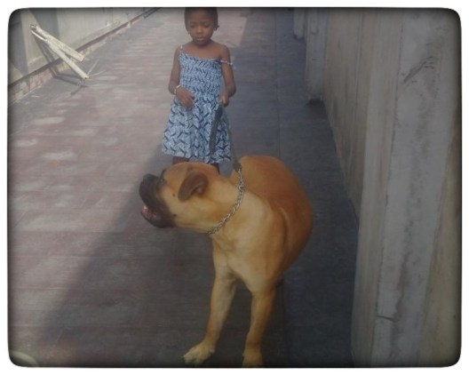 Mr. Daniel's daughter with Odeku-the Boerboel
