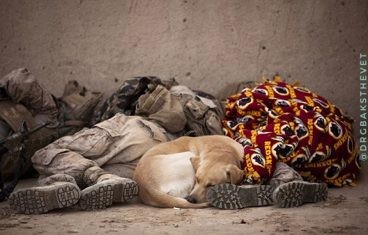 Nigerian local dog asleep between sleeping soldiers