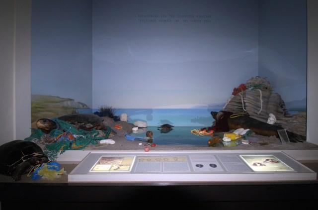 Plastic_TurtleSealDiorama_Intervention_sm