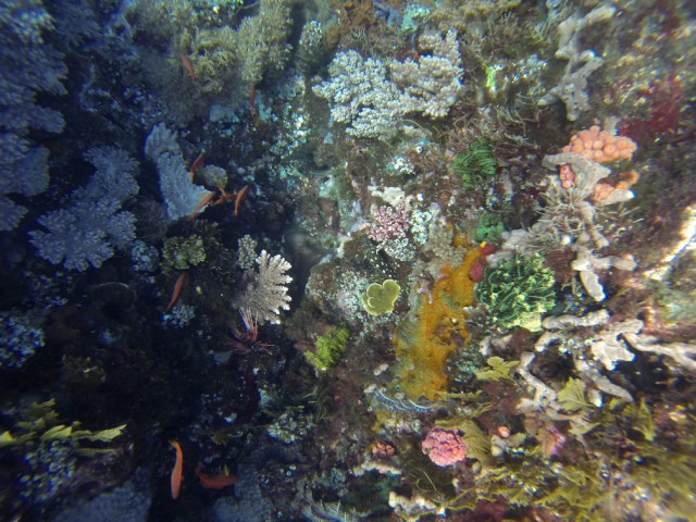 corallifebeauty