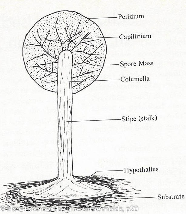 Animal, Mineral or Fungi? - Driftless Prairies Native Habitat