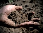 hand and soil