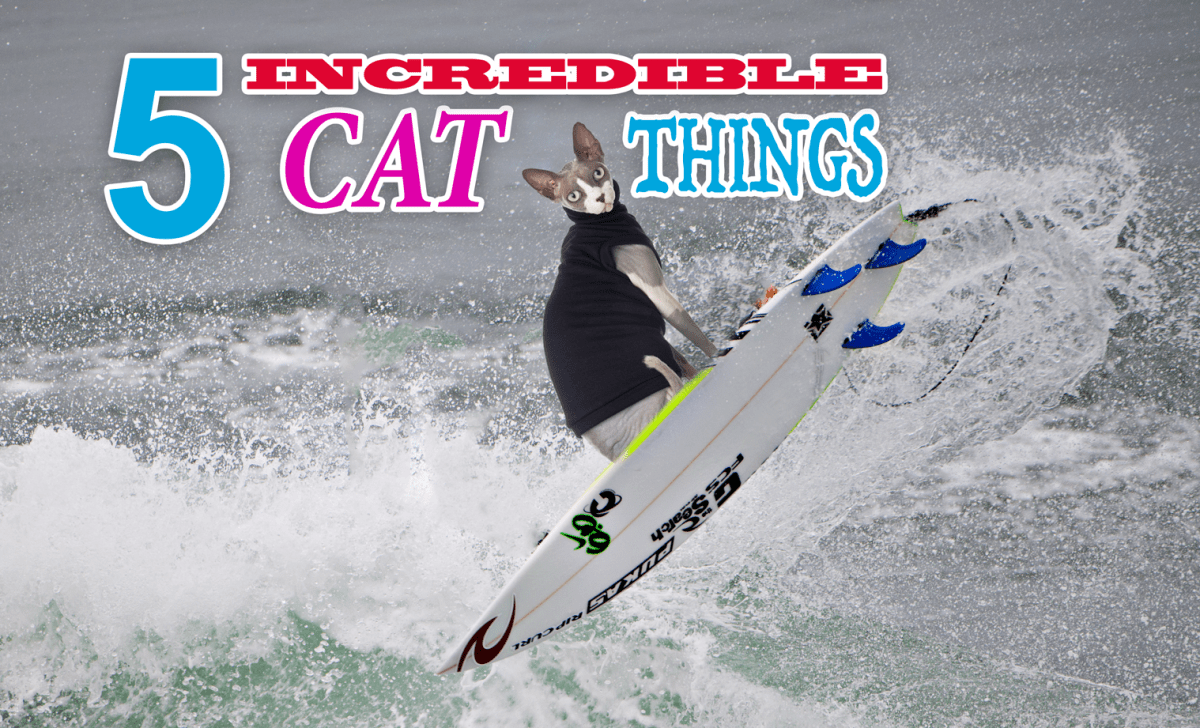 5 Incredible Things You Didn't Know Cats Could Do!