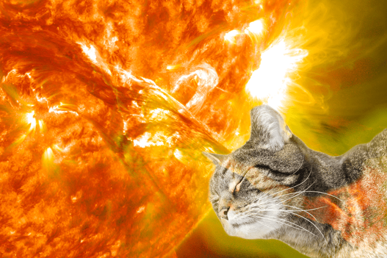 A cat recharging with the suns energy