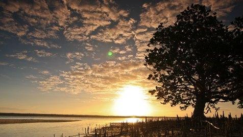Das kleine Naturschutzgebiet der Pomene-Lagune zieht durch seine ungewöhnliche Fauna und Flora zahlreiche Besucher an. Bild: ARTE France / © Earth-Touch