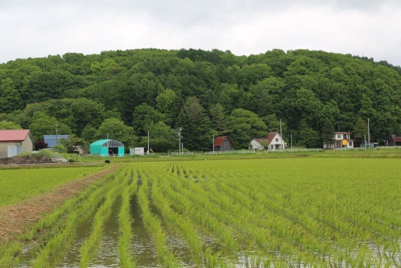 この田園風景も、かつて開拓者たちが森を拓き、長い月日をかけて作り出したもの。