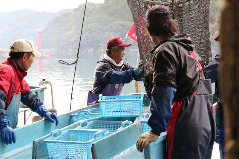 早田町では、大型定置網漁で捕れた新鮮な魚が水揚げされます