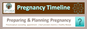 OptimaWHC Pregnancy Timeline Infographic