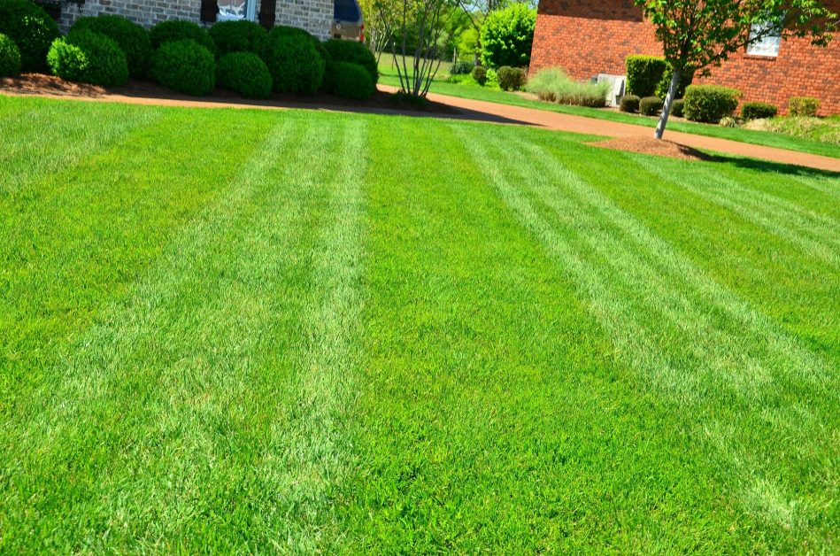 Allentown Lawn Service The Ultimate Lawn Care Guide