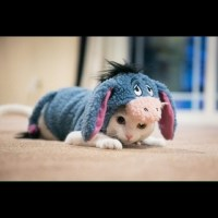 63% off Other - Eeyore Pet Dog and Cat Costume from ...