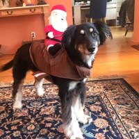 50% off Other - Santa Saddle Dog Costume  from Laura's ...