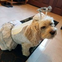 Other | Dog Angel Costume Size Medium | Poshmark