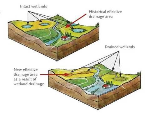 Wetlands and Watersheds
