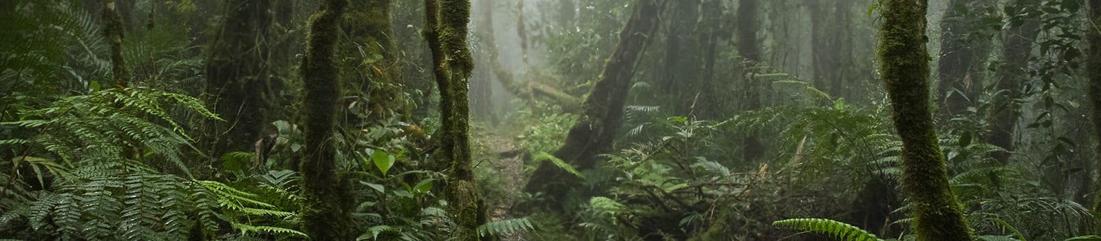 Povești cu triburi -V- Pădurile cu stafii ale dayakilor meratus