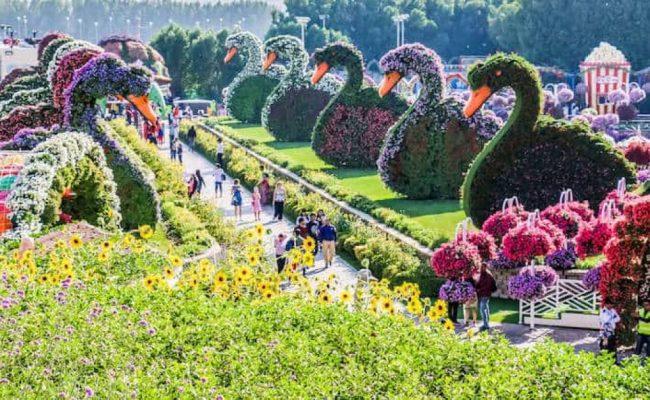 Dubai Miracle Garden Opening Date 2019 2020 United Arab Emirates