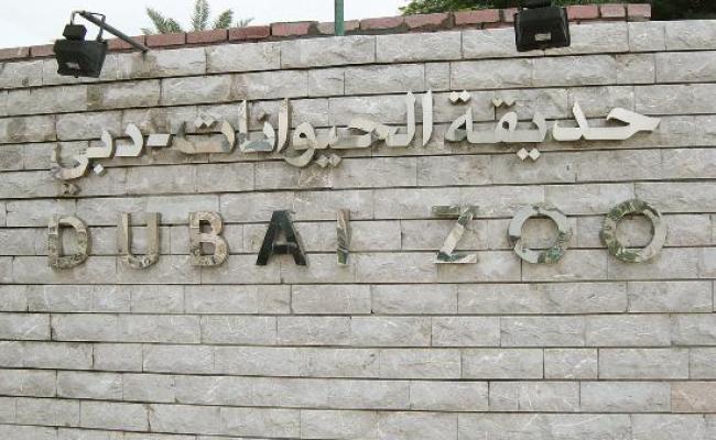 Dubai Zoo Uae Zoo Is Closed Now Visit Dubai Safari Park