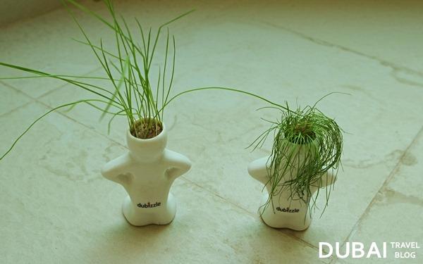 dubizzle plant man