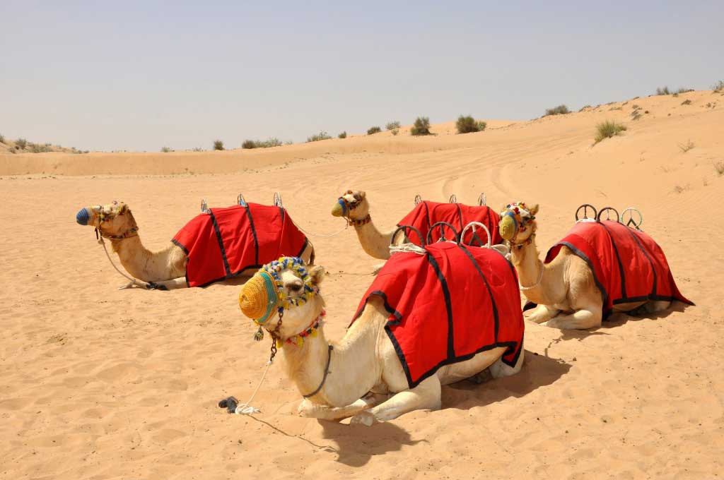 Tips For Going on Holiday To Dubai