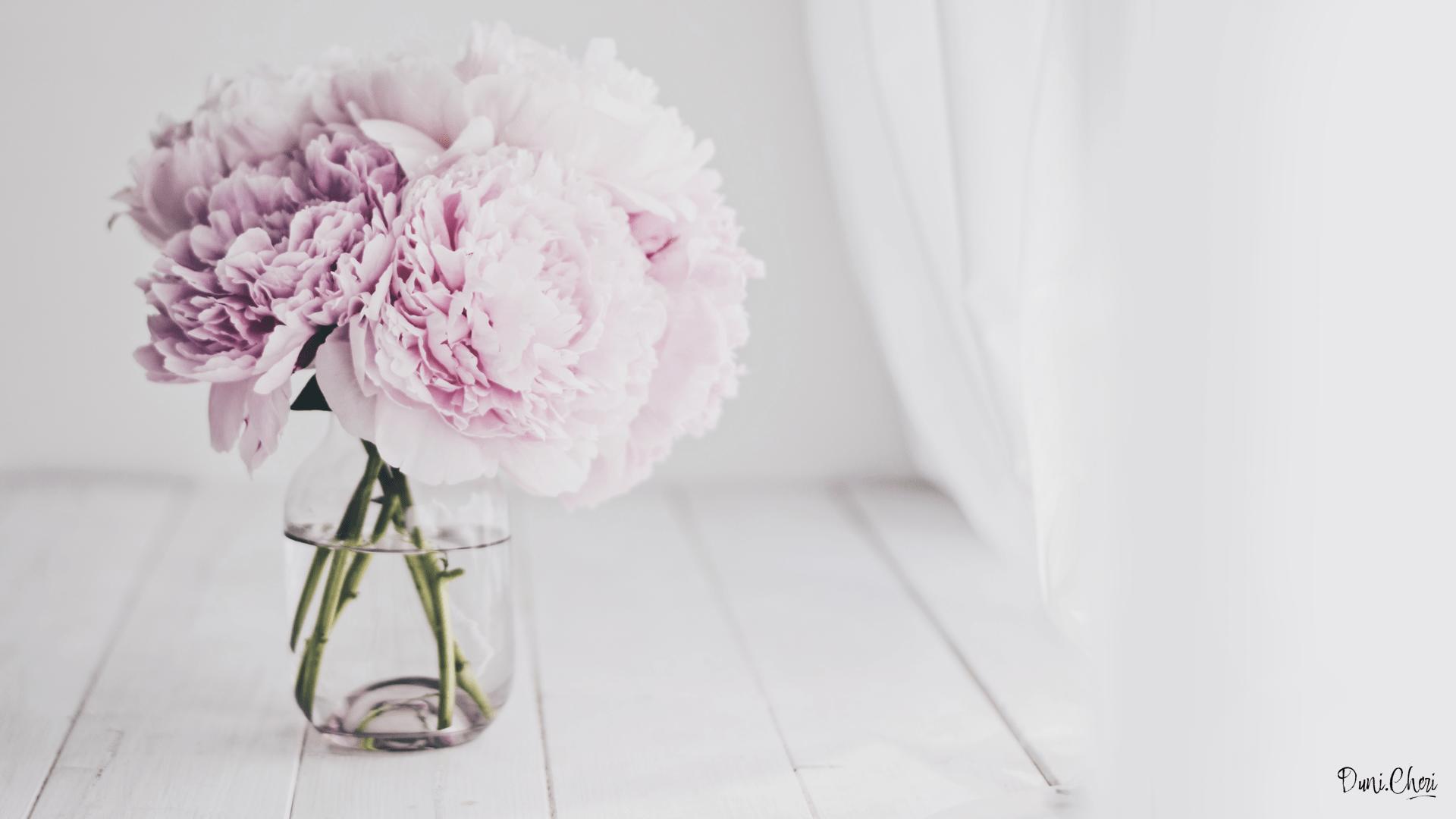 Cherry Blossom Wallpaper Hd Free Download Spring Flower Wallpaper Kostenlose