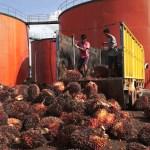 Golden Plantation dan Sampoerna Agro Ekspansi Pabrik Baru di 2018