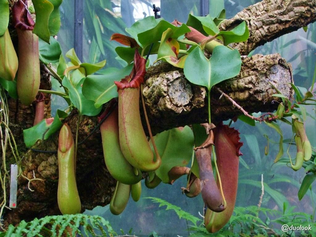 las tropikalny atrakcje londyn kew gardens