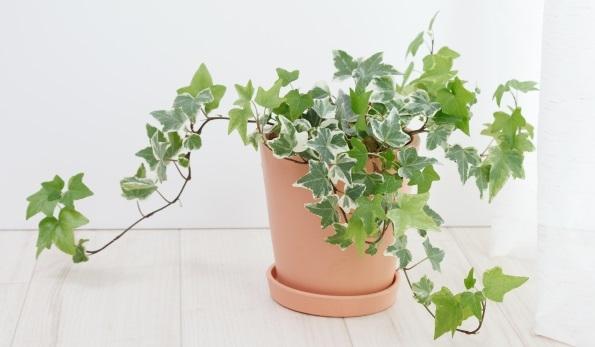 Badezimmer Pflanzen Wenig Licht