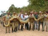 Amazing Of Big Snakes