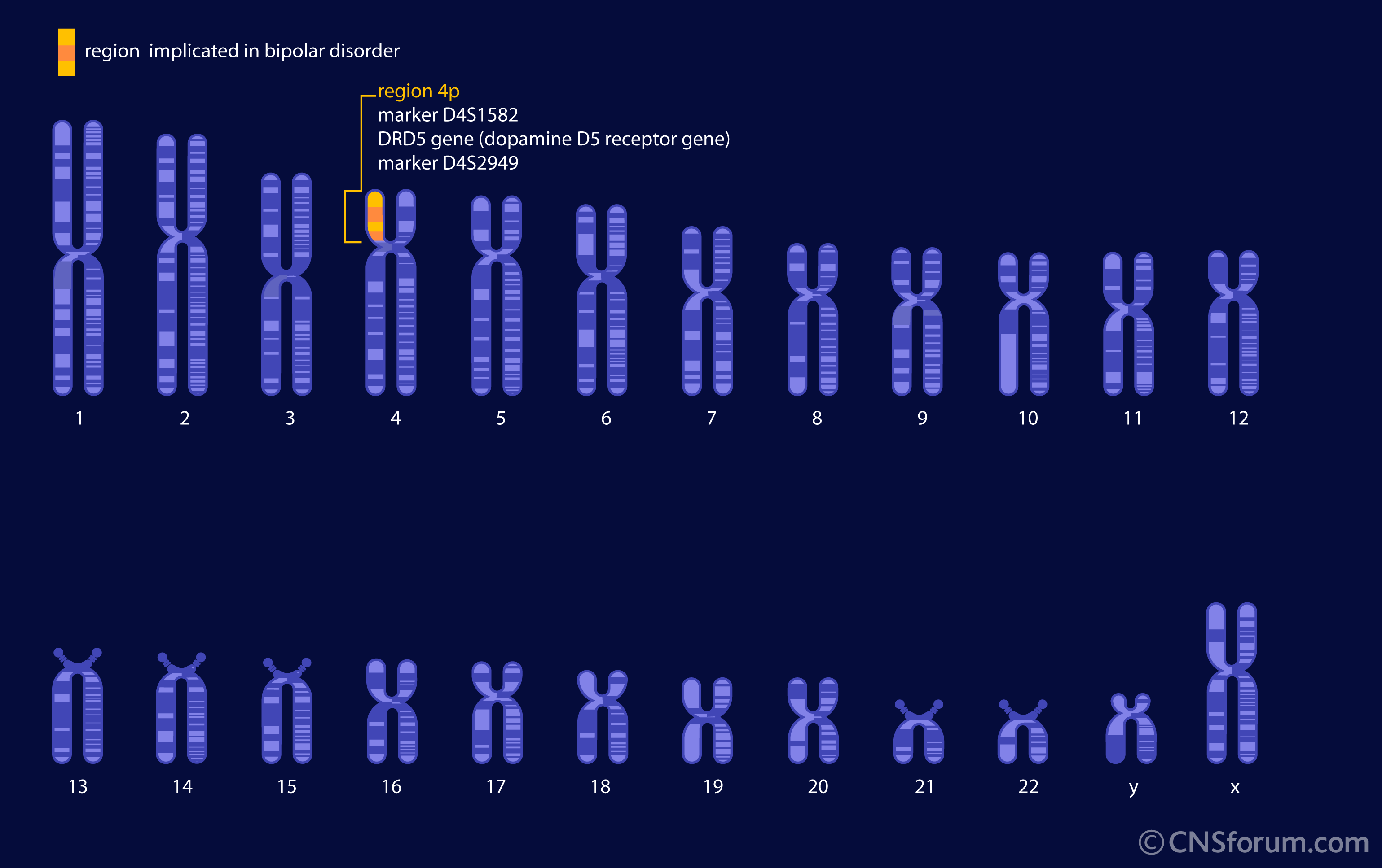 Chromosome Deletion Chromosome 4 Causes Symptoms Treatment Chromosome 4
