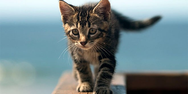 Katte Guide Fra Dyrenesdk