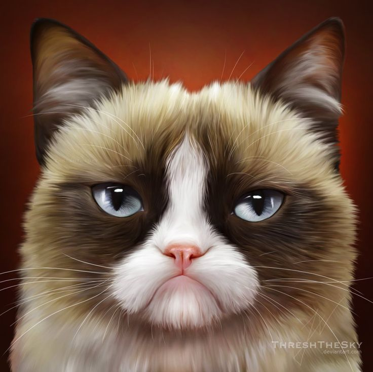 Sikh Wallpapers Hd For Iphone 5 Grumpy Cat Christmas Wallpapers 21 Dzbc Org