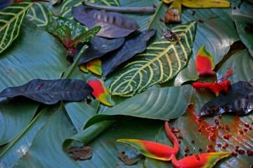 Monkey Eco art in the Amazon Rainforest